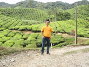 Cameron Highlands : Ringlet : Ladang teh Boh (Plantation)