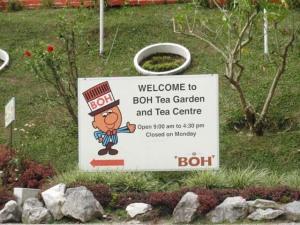 Cameron Highlands : Ladang Boh Teashop