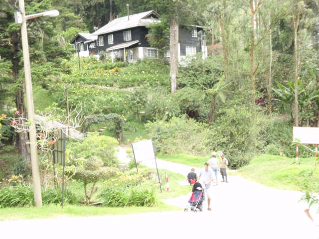 Cameron Highlands : Ladang Boh Teashop Habu Ringlet