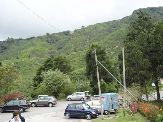Pemandangan indah sekitar Teashop Boh