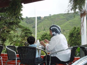 Cameron Highlands cafe Boh