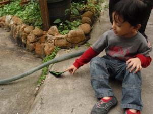 Taman Rama-rama : Rama-rama yang jinak