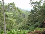 cameron highlands, penginapan, hotel